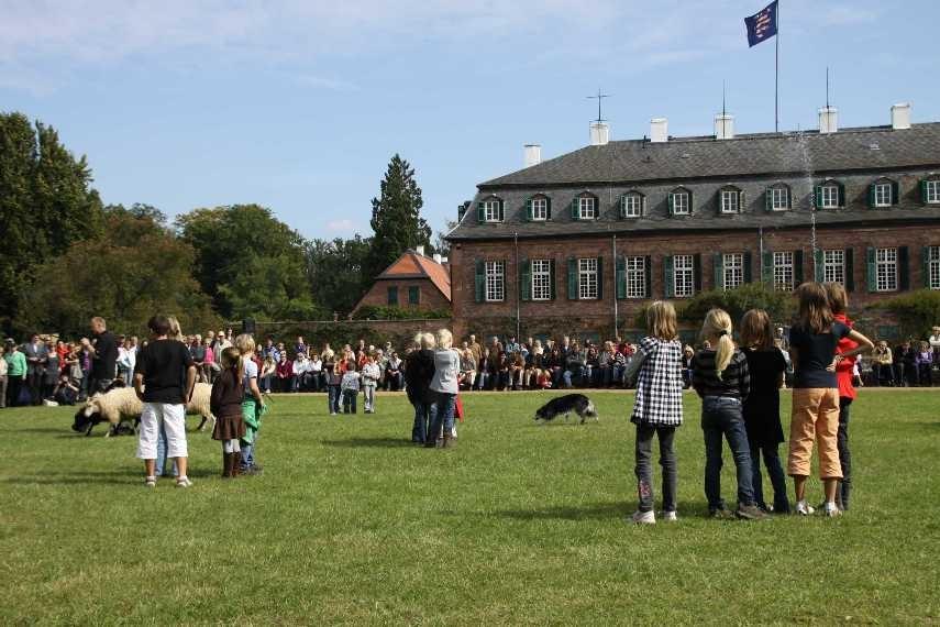 286_0655_19 Sept 2010_Gartenfest_Schloss Wolfsgarten_Border-Collies