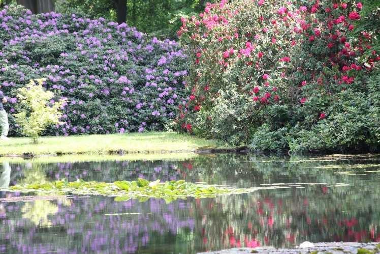 0147_19 Mai 2012_Rhododendron_Schlosspark_Teich_Blüte