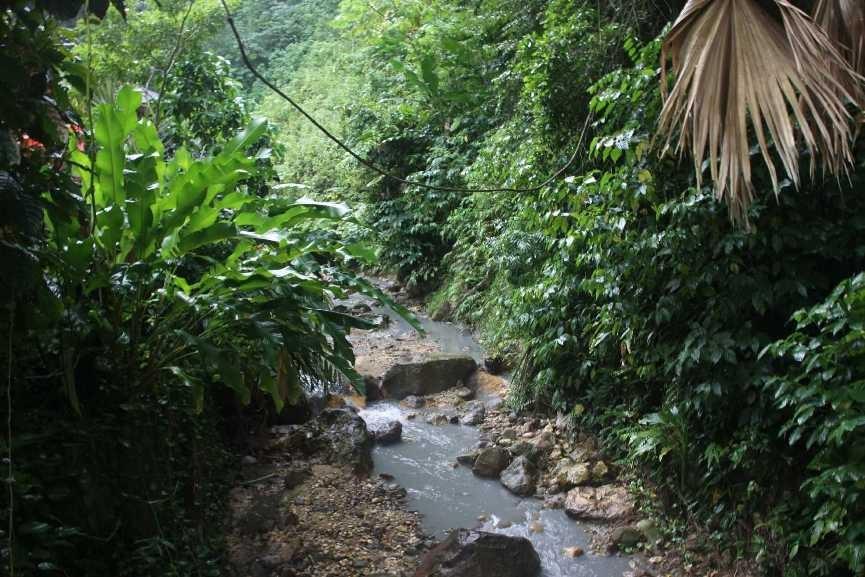 4357_06 DEZ 2013_St-Lucia_Soufriere_Botanical Garden