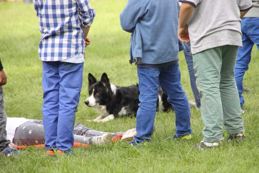 0269_22 Sept 2013_Gartenfest_Bordercollies & Heidschnucken
