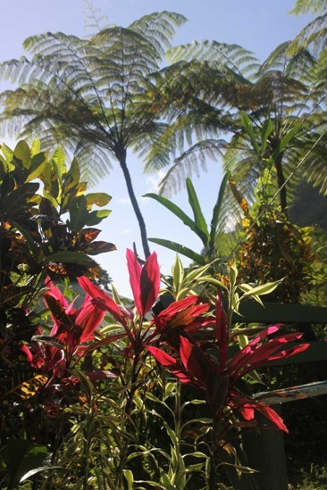 0950_25 NOV 2013_Dominica_Trafalgar Falls