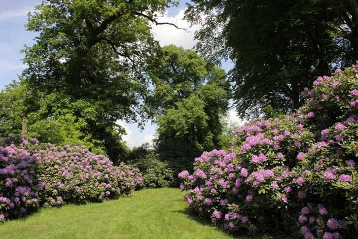 0204_19 Mai 2012_Rhododendron_Blüte