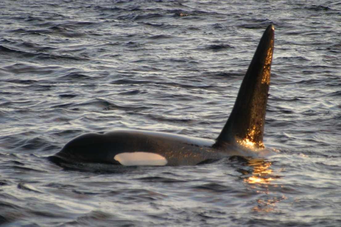 Säule im Eingangsbereich: 3er-Serie Orcas + Pottwale