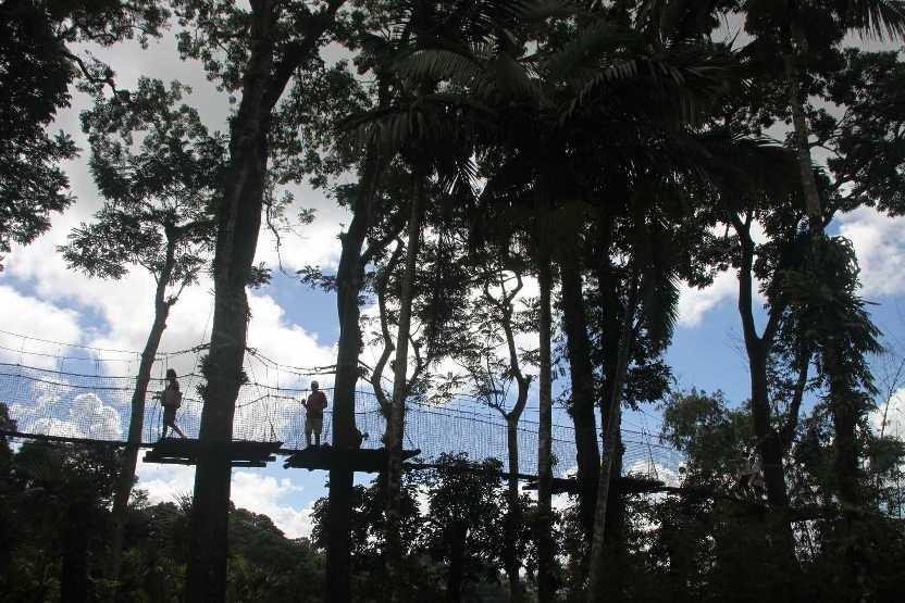4026_05 DEZ 2013_Martinique_Jardin de Balata_Hochseilgarten