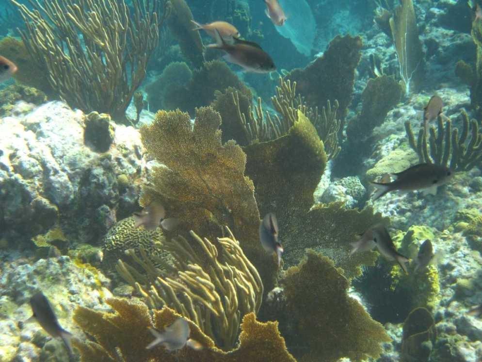 3531_04 DEZ 2013_St-Vincent_Lebendiges-Riff-Tour_Mount Wynne Beach_unter Wasser