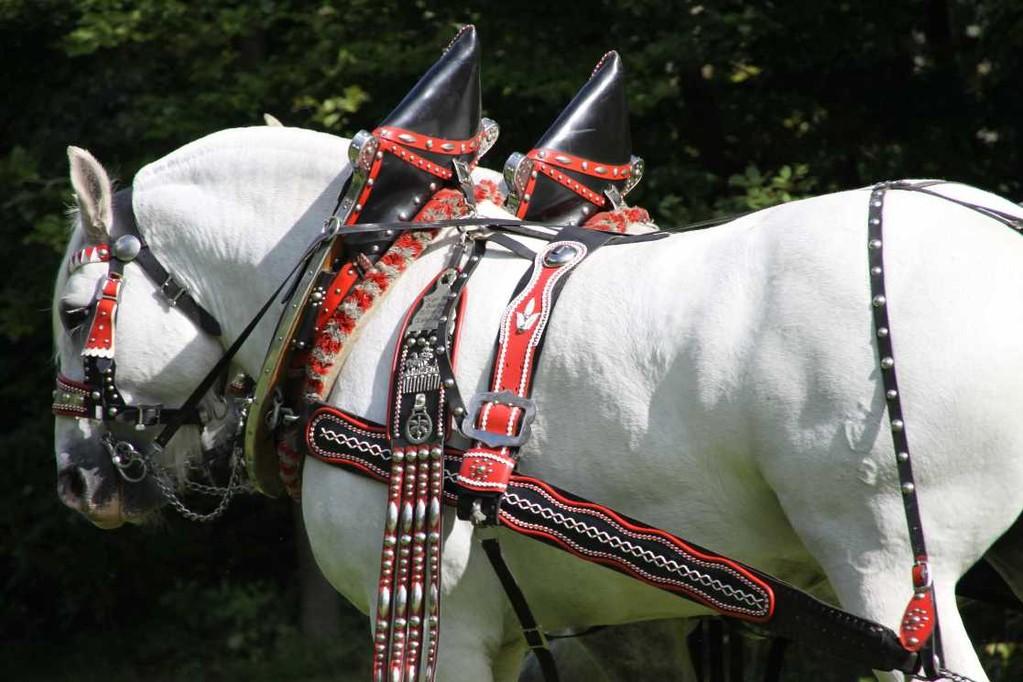 159_0147_17 Sept 2010_Gartenfest_Percheron-Pferde