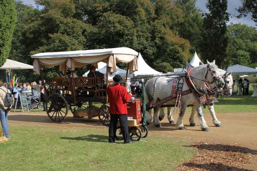164_0253_17 Sept 2010_Gartenfest_Percheron-Pferde