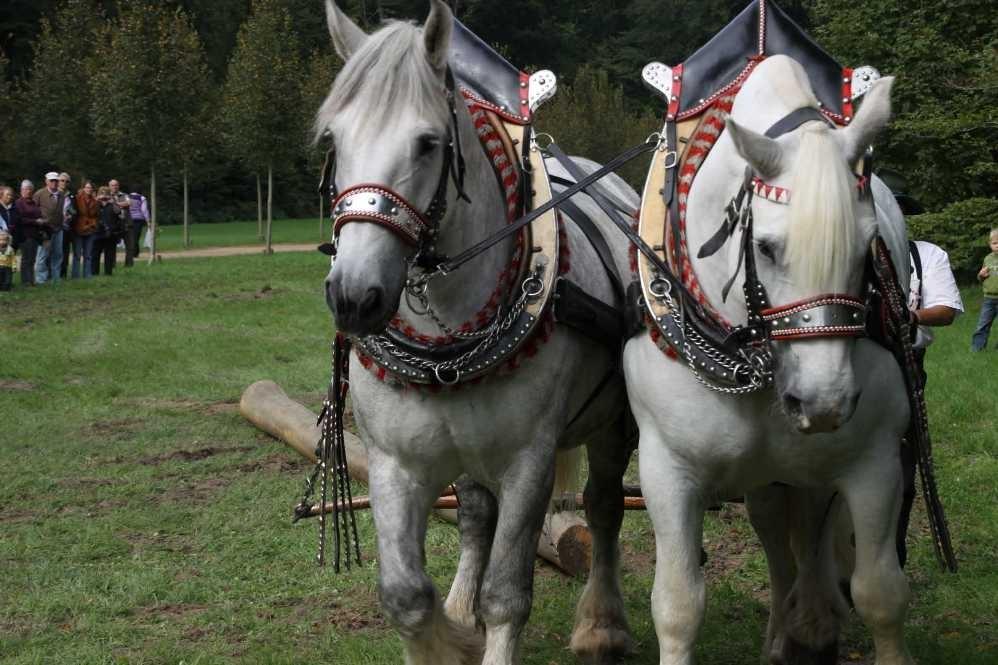 211_0750_19 Sept 2010_Gartenfest_Percheron-Pferde