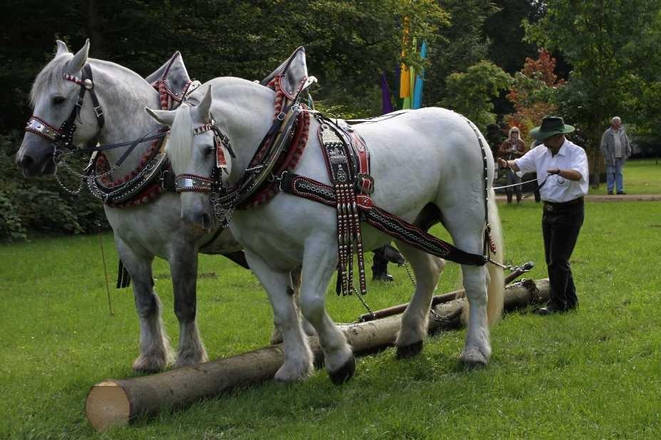 149_0126_17 Sept 2010_Gartenfest_Percheron-Pferde
