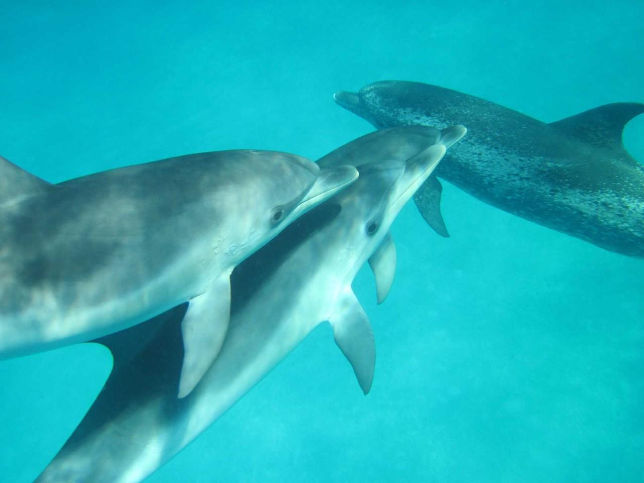 Empfangsbereich: 4er-Serie Delphine