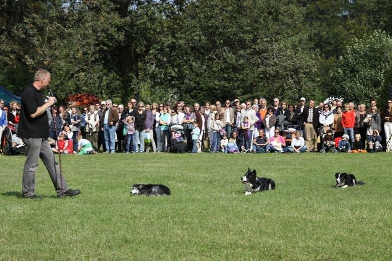 272_0611_19 Sept 2010_Gartenfest_Border-Collies