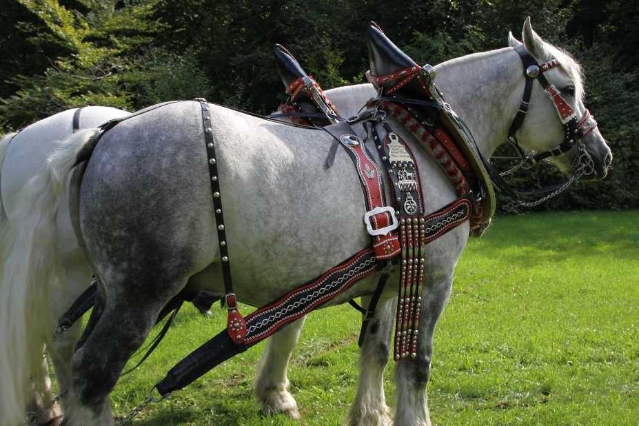 154_0136_17 Sept 2010_Gartenfest_Percheron-Pferde