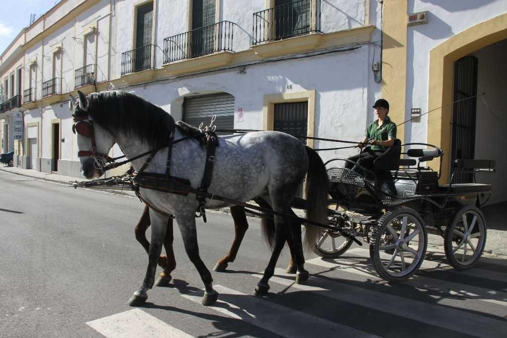 0429_11 Okt 2010_Jerez_Real Escuela Andaluza_Kutschenmuseum