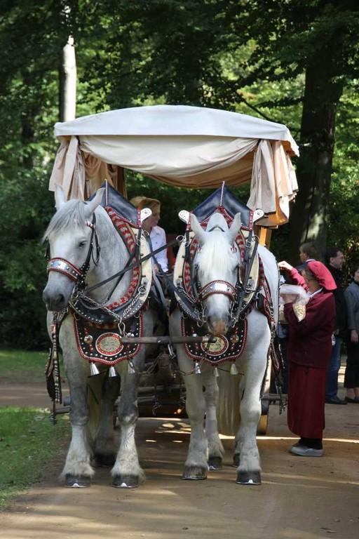 180_0316_17 Sept 2010_Gartenfest_Percheron-Pferde