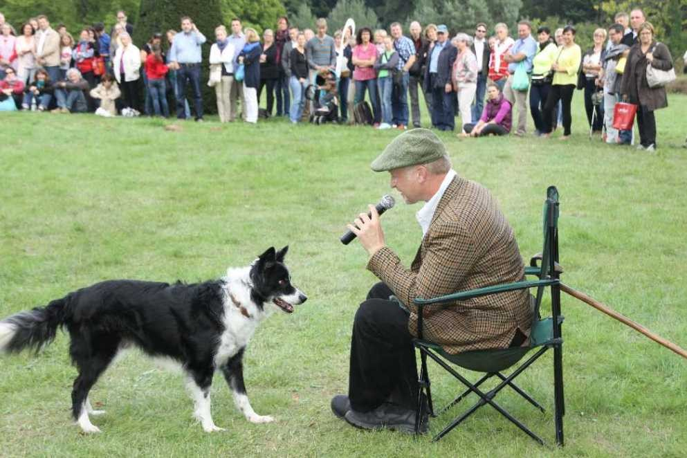 0286_22 Sept 2013_Gartenfest_Bordercollies & Heidschnucken