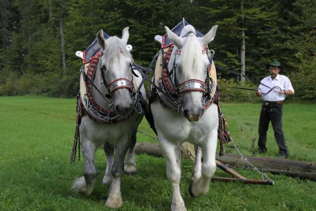 158_0145_17 Sept 2010_Gartenfest_Percheron-Pferde