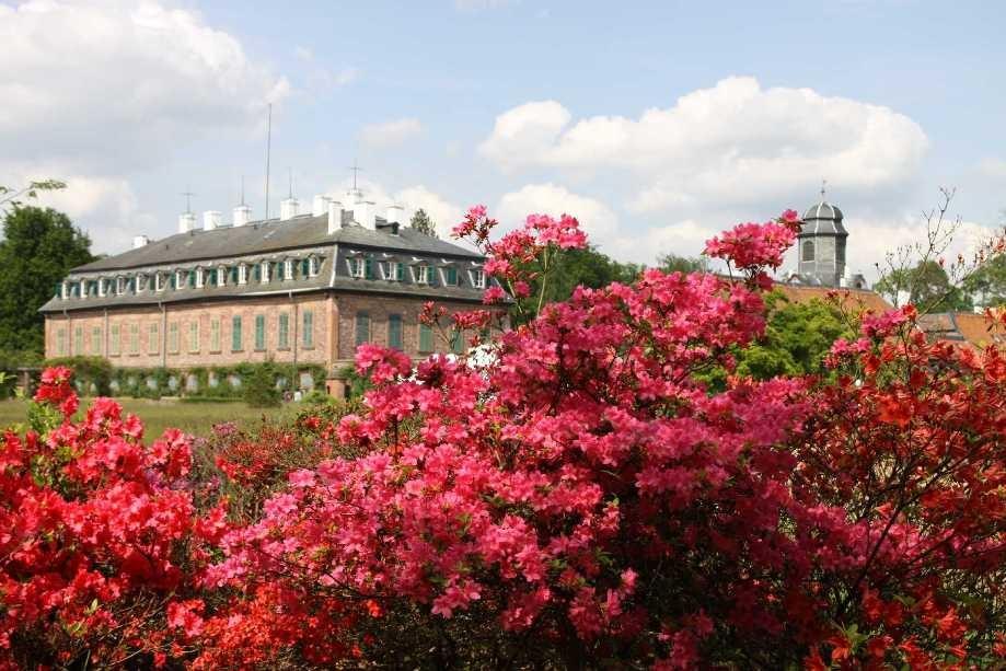 0281_19 Mai 2012_Rhododendron_Schloss Wolfsgarten_Blüte