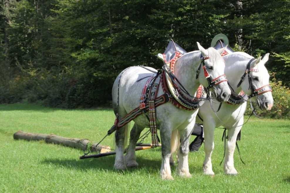 142_0105_17 Sept 2010_Gartenfest_Percheron-Pferde