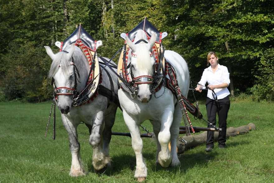 195_0380_17 Sept 2010_Gartenfest_Percheron-Pferde