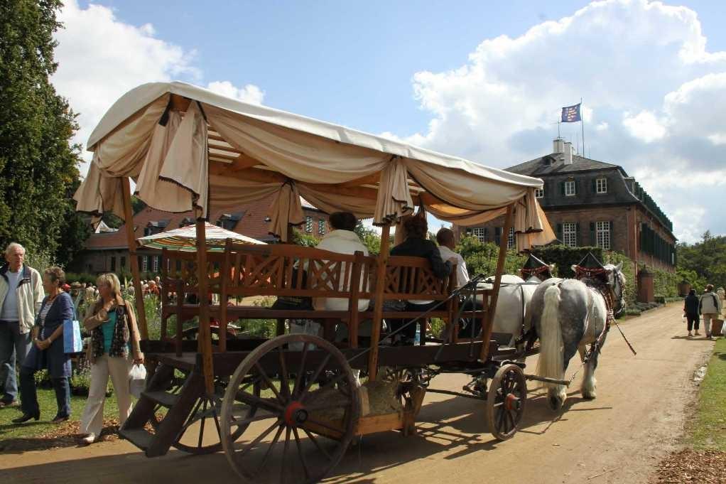 166_0255_17 Sept 2010_Gartenfest_Schloss Wolfsgarten_Percheron-Pferde