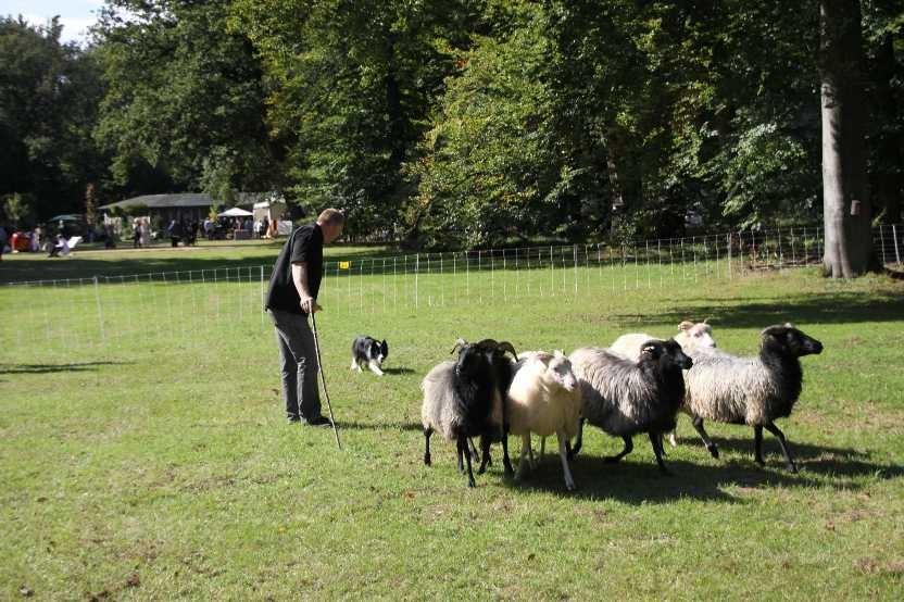 232_0404_17 Sept 2010_Gartenfest_Border-Collies