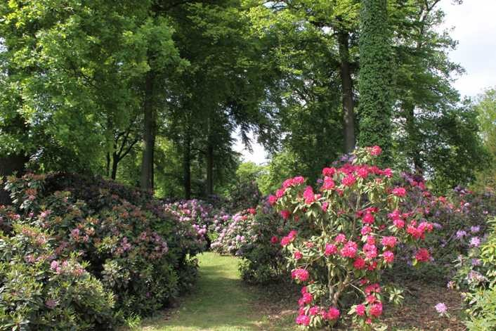 0266_19 Mai 2012_Rhododendron_Blüte