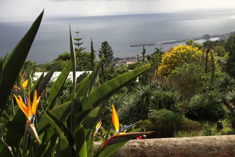 1248_14 Okt 2010_Madeira_Monte_Jardim Botanico_Strelizie