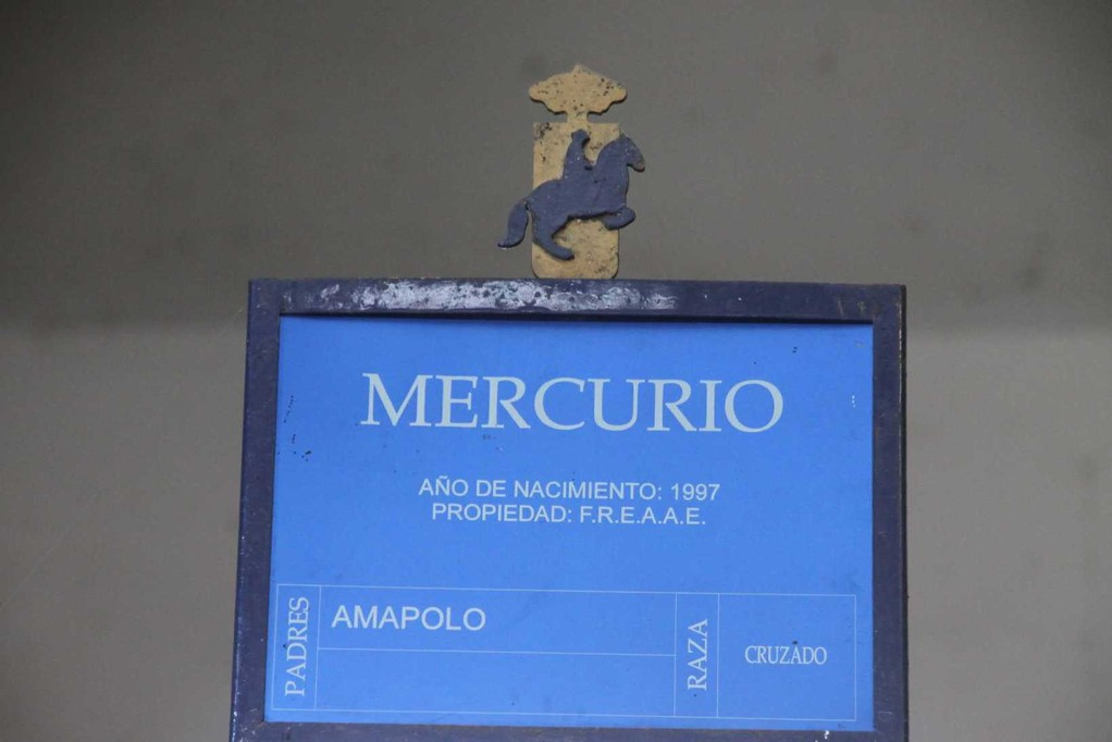0419_11 Okt 2010_Jerez_Real Escuela Andaluza_im Stall