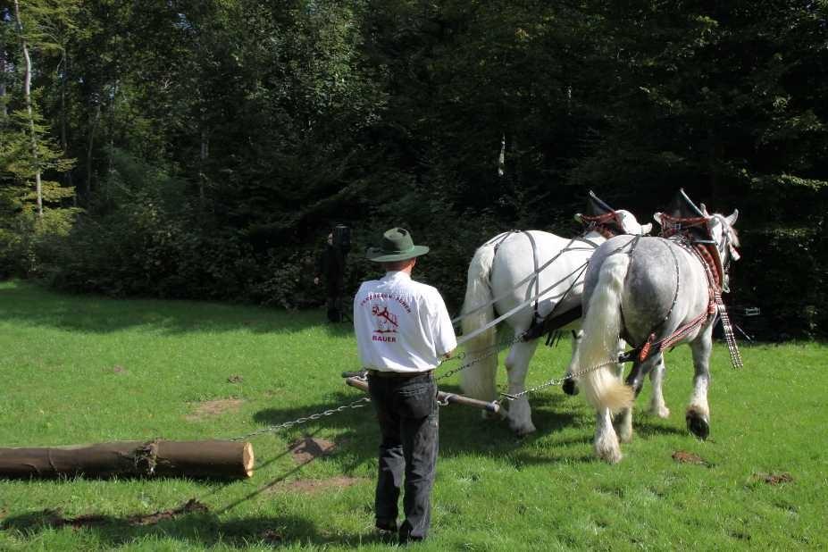 143_0113_17 Sept 2010_Gartenfest_Percheron-Pferde