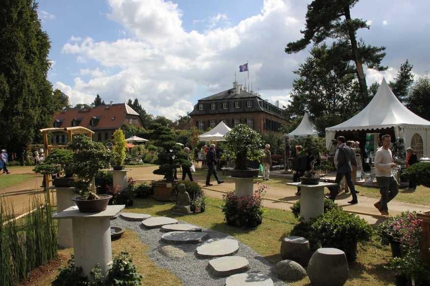 089_0247_17 Sept 2010_Gartenfest_Schloss Wolfsgarten_Aussteller_Bonsai