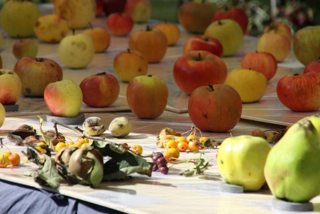 045_0160_16 Sept 2011_Gartenfest_Aussteller