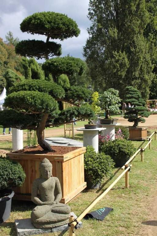 087_0245_17 Sept 2010_Gartenfest_Aussteller_Bonsai
