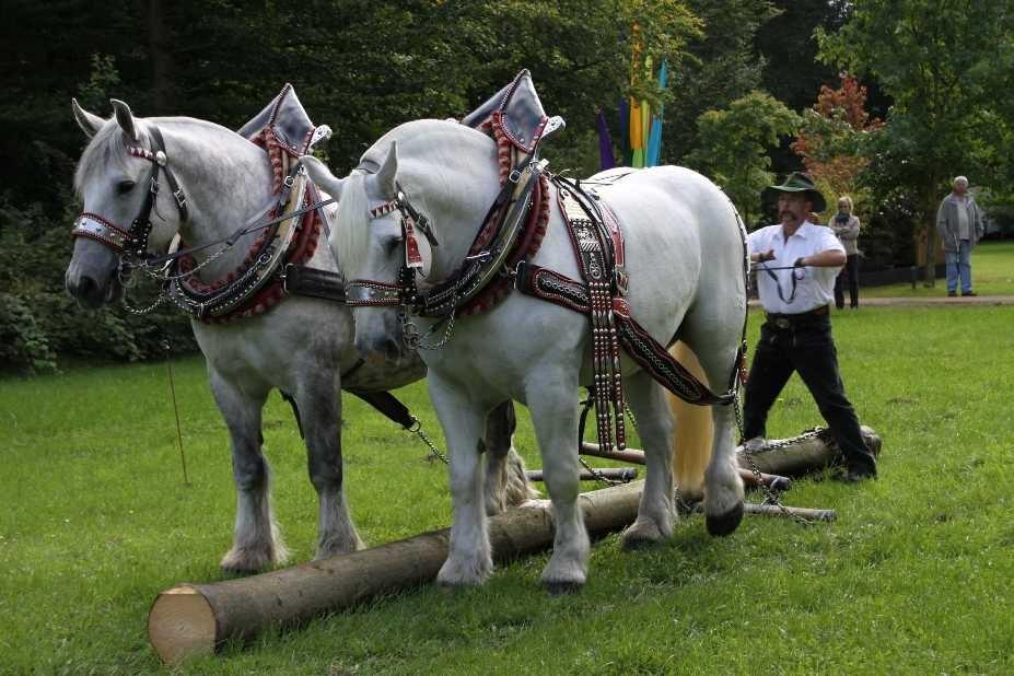 150_0127_17 Sept 2010_Gartenfest_Percheron-Pferde