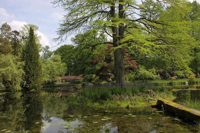0127_19 Mai 2012_Rhododendron_Schlosspark_Teich_Brücke