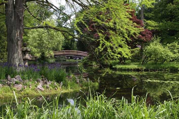 0120_19 Mai 2012_Rhododendron_Schlosspark_Teich_Brücke