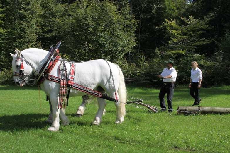 144_0116_17 Sept 2010_Gartenfest_Percheron-Pferde