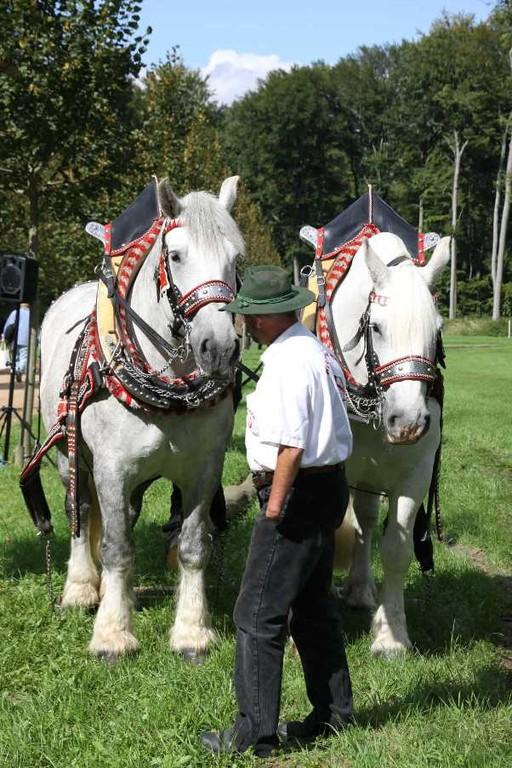 183_0347_17 Sept 2010_Gartenfest_Percheron-Pferde
