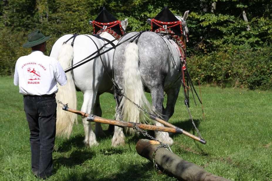188_0358_17 Sept 2010_Gartenfest_Percheron-Pferde