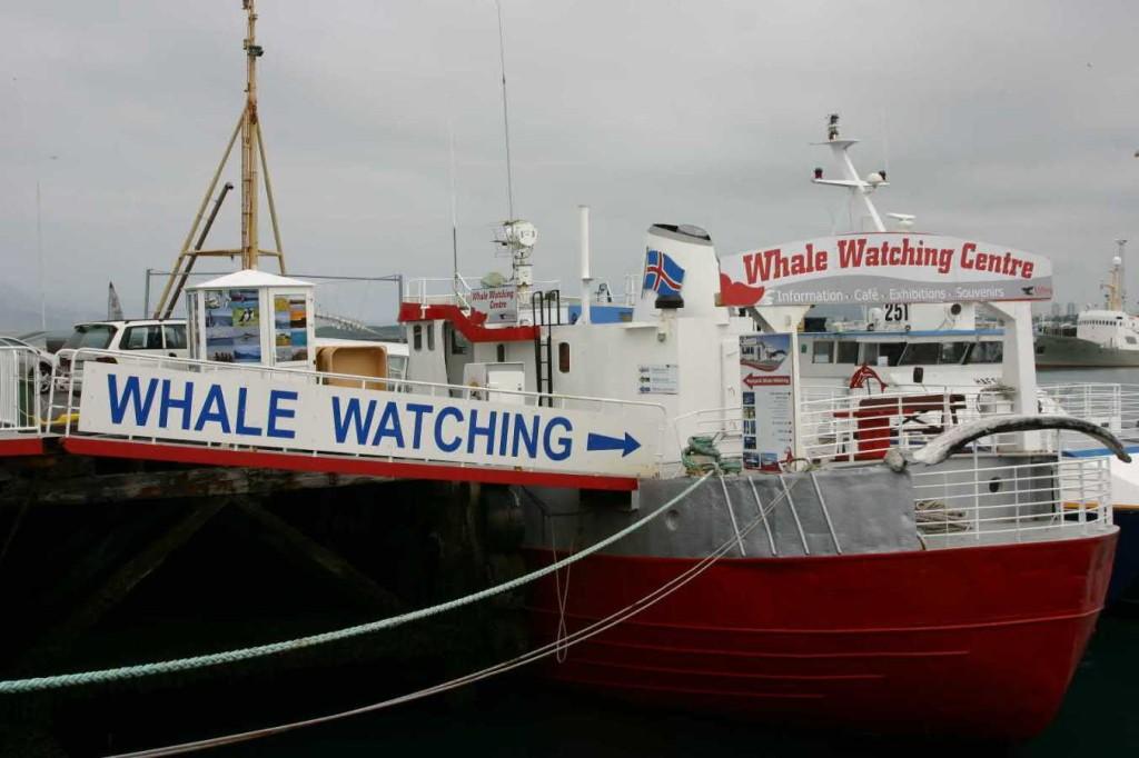 Bild 0543 - Island / Reykjavik, Whale Watching-Schiff