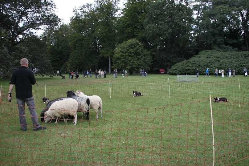 247_0534_18 Sept 2010_Gartenfest_Border-Collies