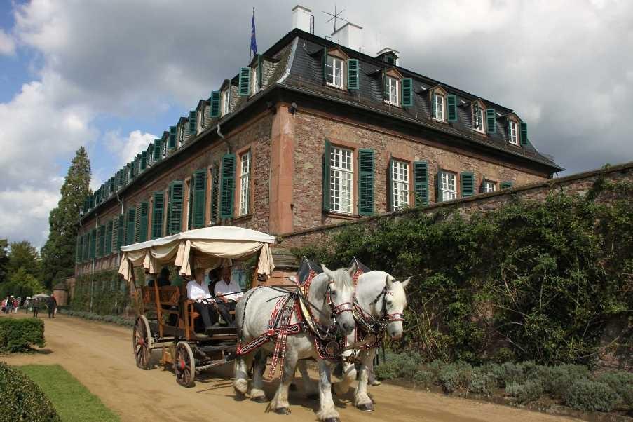 178_0295_17 Sept 2010_Gartenfest_Schloss Wolfsgarten_Percheron-Pferde