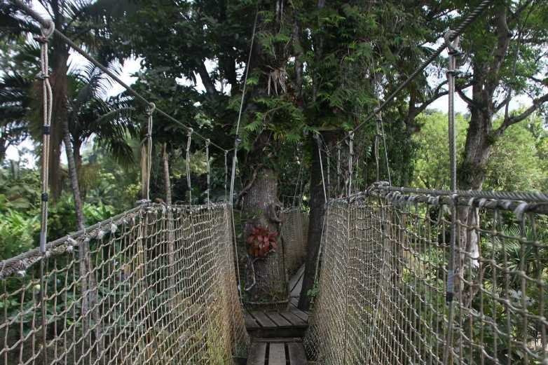 4045_05 DEZ 2013_Martinique_Jardin de Balata_Hochseilgarten