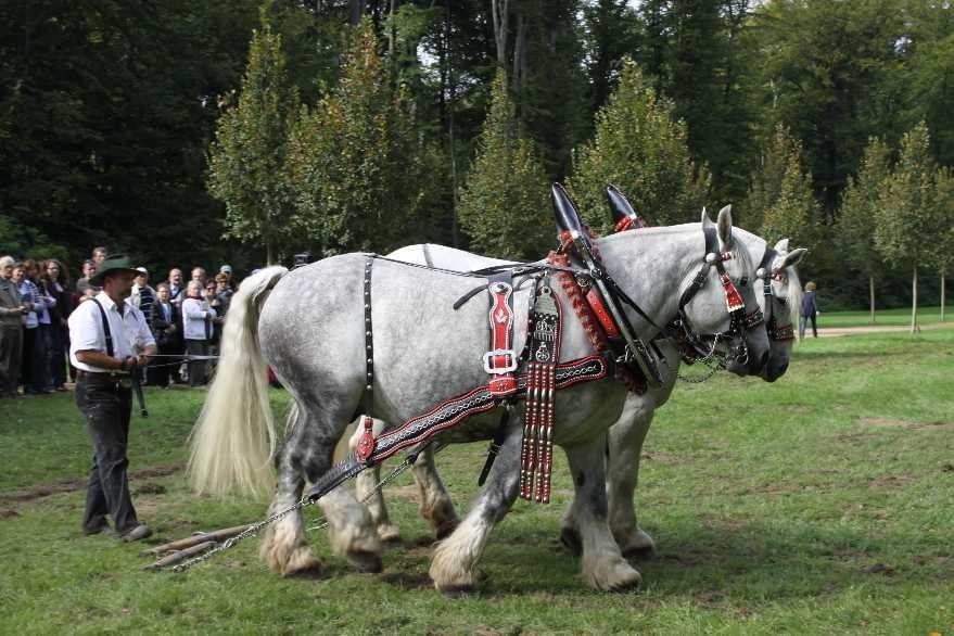 199_0724_19 Sept 2010_Gartenfest_Percheron-Pferde