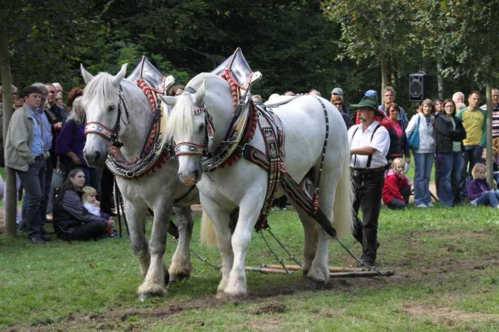197_0721_19 Sept 2010_Gartenfest_Percheron-Pferde