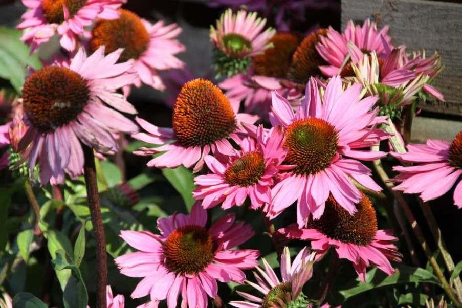 067_0216_16 Sept 2011_Gartenfest_Aussteller