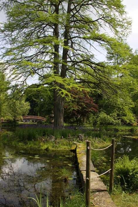 0126_19 Mai 2012_Rhododendron_Schlosspark_Teich_Brücke