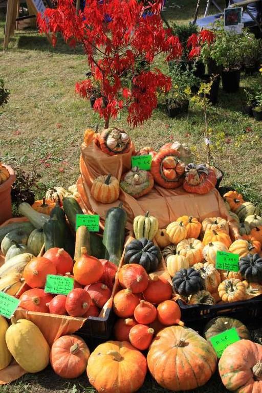 074_0212_17 Sept 2010_Gartenfest_Aussteller