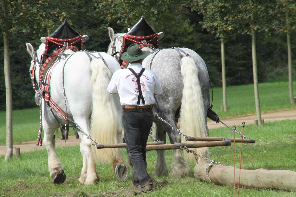 206_0741_19 Sept 2010_Gartenfest_Percheron-Pferde