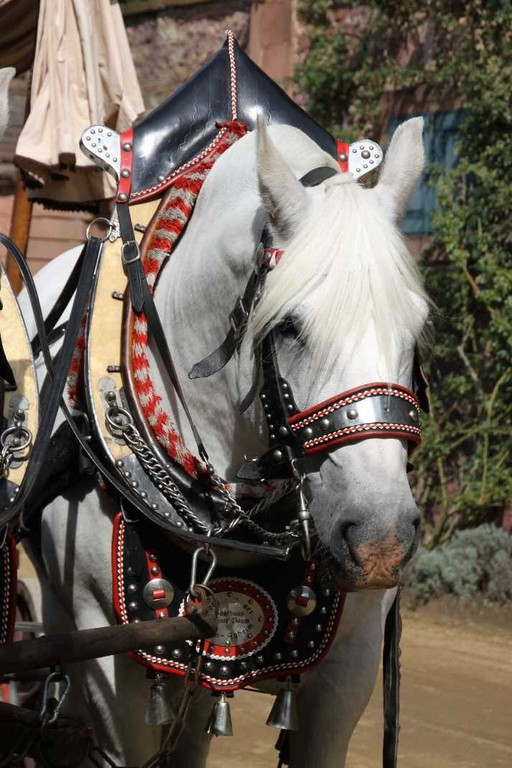 175_0288_17 Sept 2010_Gartenfest_Percheron-Pferde