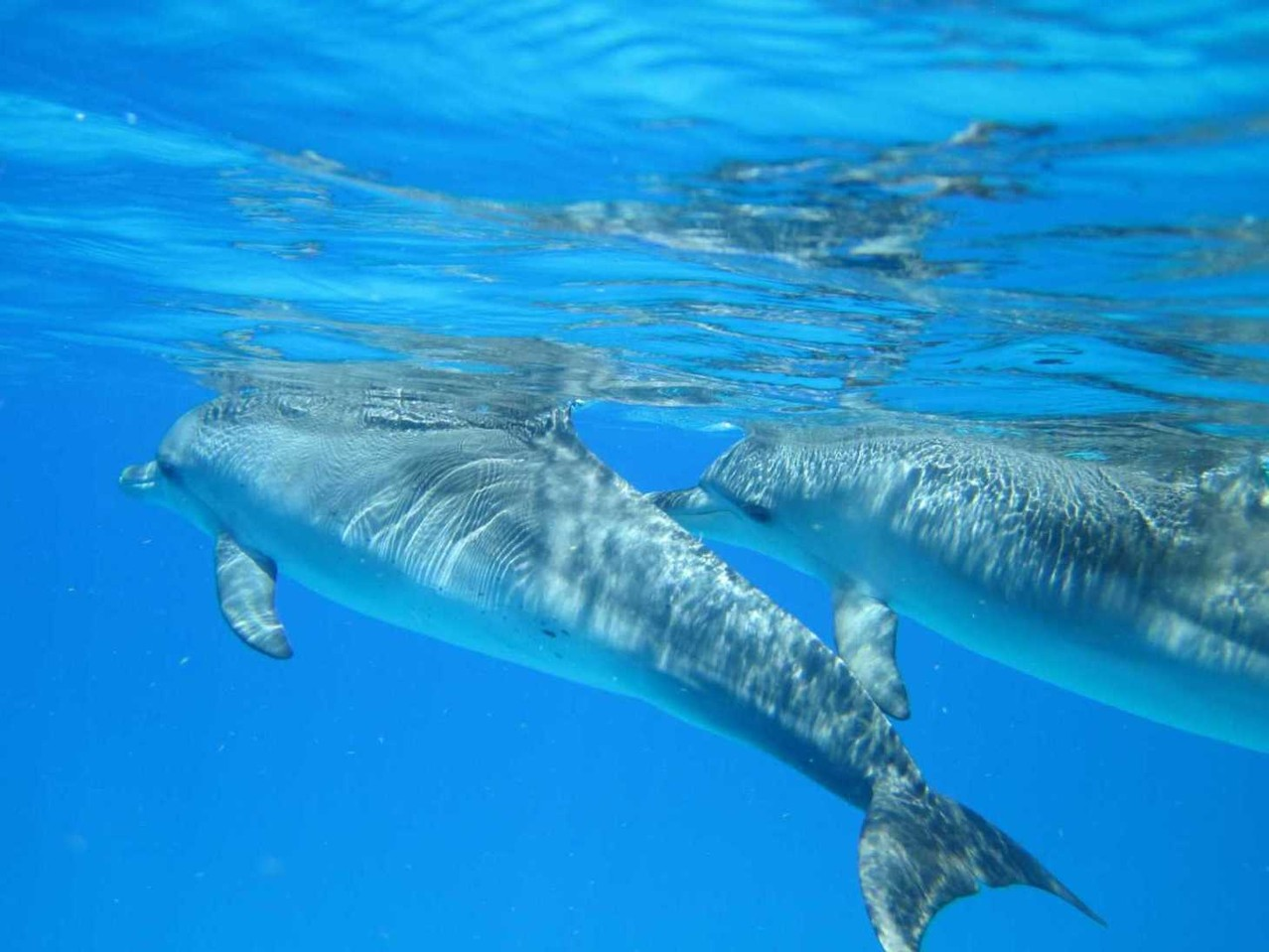 Labor: Flecken-Delphine